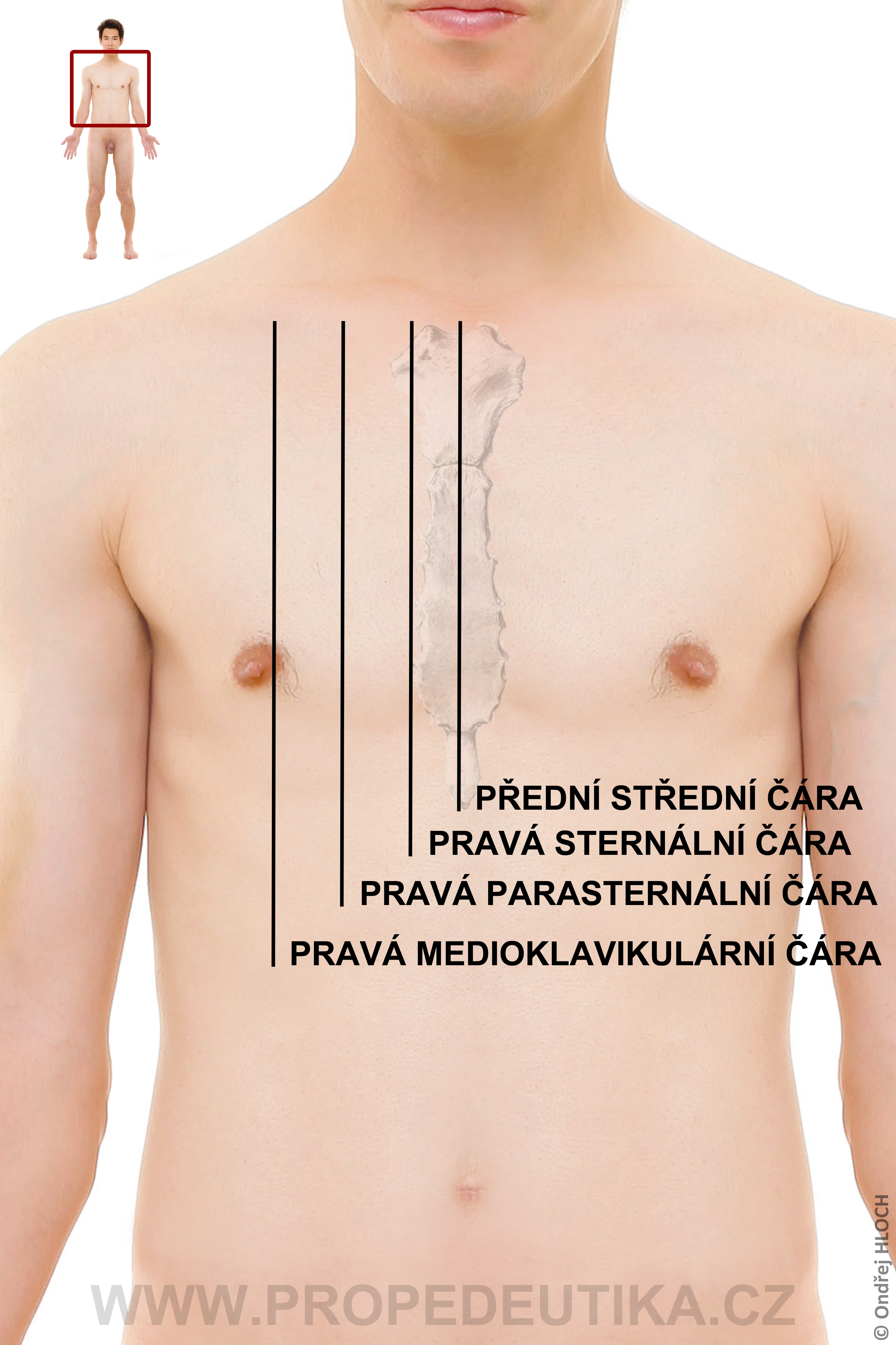 hrudnik_front_orientacni_cary_full