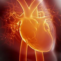 Vyšetření srdce